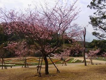 2012.2.21フラワーパーク(伊豆の踊り子) 013.jpg