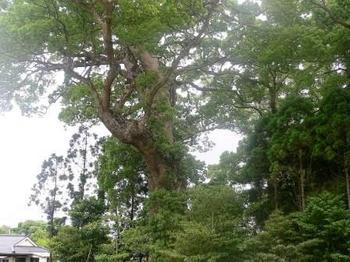 縄文の森 002.jpg